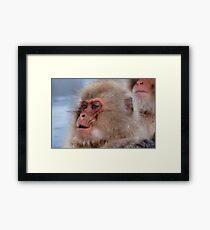 Japan snow monkey Framed Print