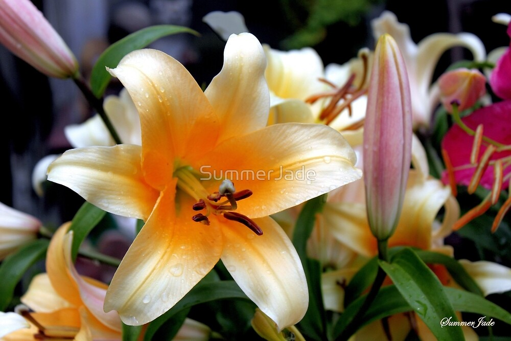 Tequila Sunrise Lily with Raindrops by SummerJade
