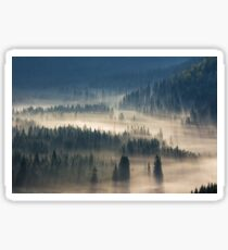 coniferous forest in foggy mountains Sticker