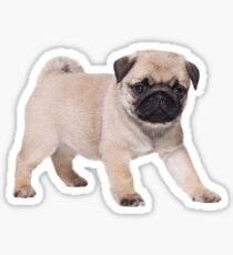 Pug Puppy 2 Sticker