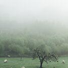 Sheeps by Tomáš Hudolin
