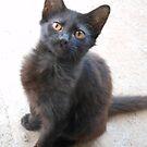 Salem the cat by Kashmere1646