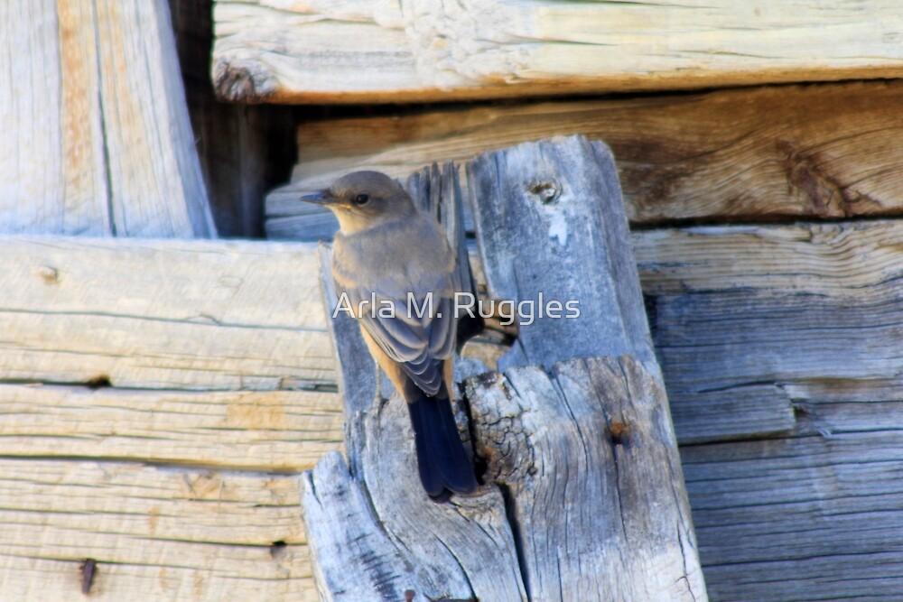 Barnwood Swallow by Arla Ruggles