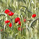 Corn Poppies by taiche