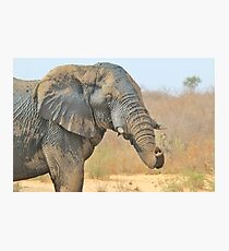 Elephant Bull - Beautiful Mud - African Wildlife Photographic Print