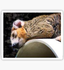 Crowned Lemur Sticker