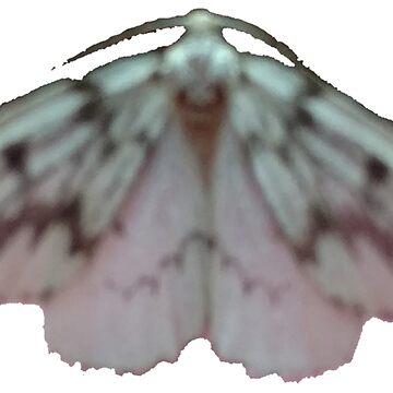Unknown Moth #1 A by spookyluca