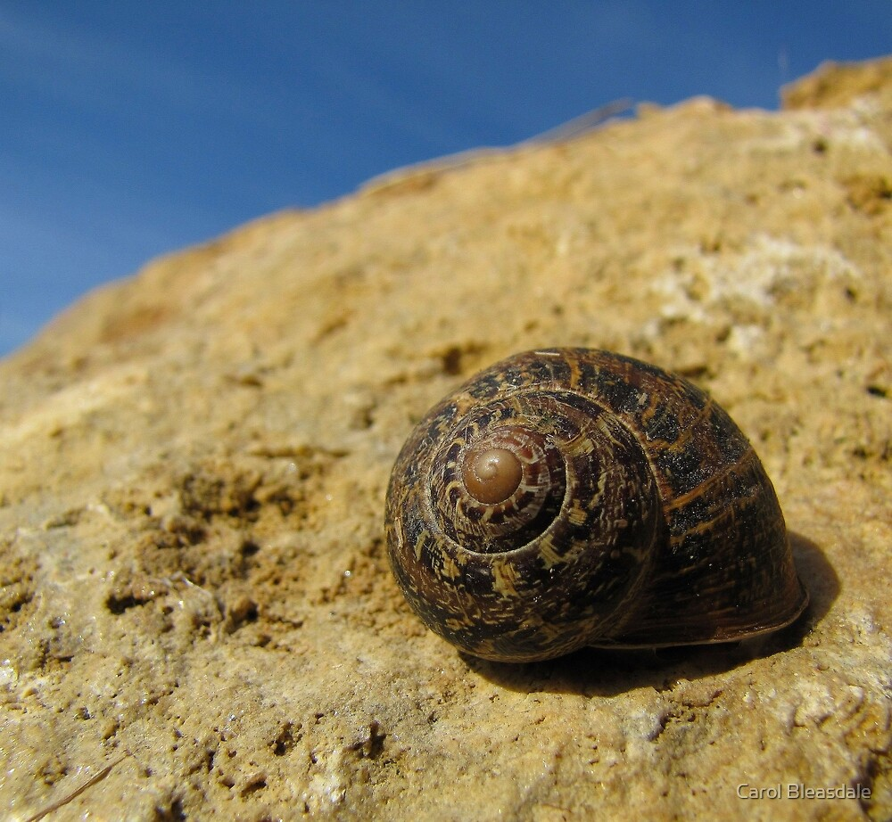 Snail on a Rock by Carol Bleasdale