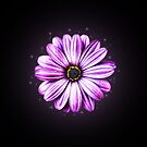 Pink Daisy by Helmar Designs