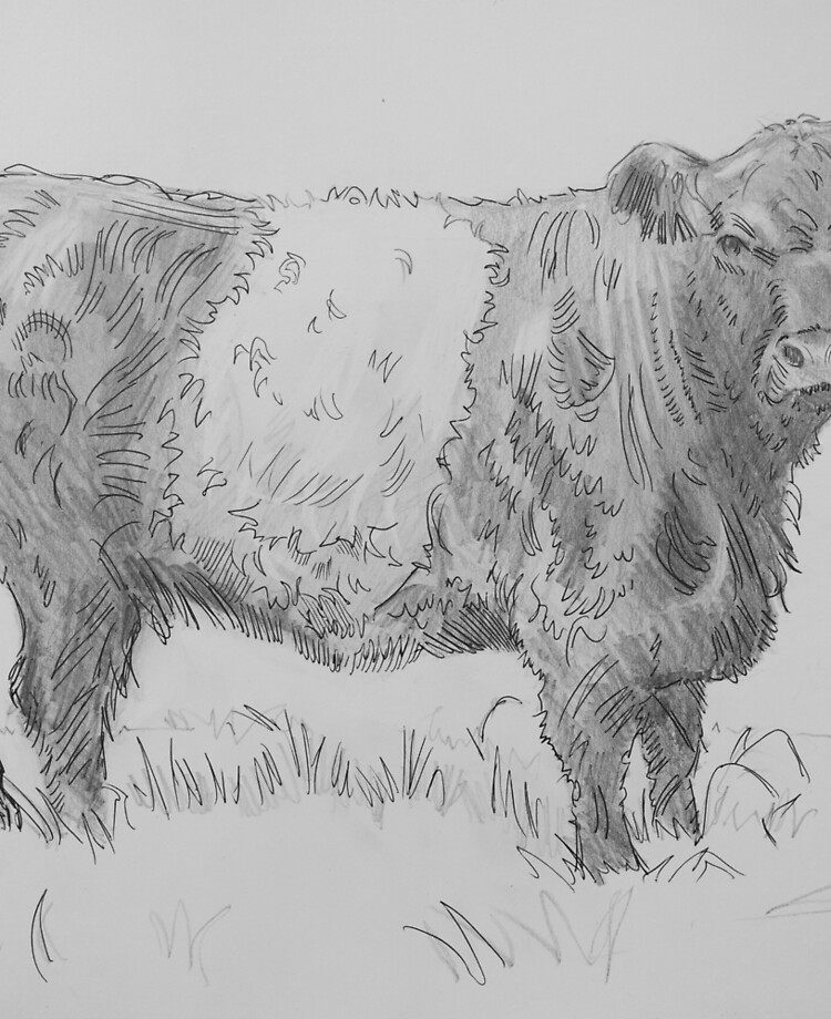 Belted Galloway Cow Pencil Drawing | iPad Case & Skin