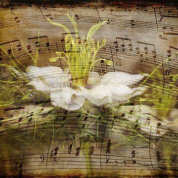 Music of Nigella by cherryannette