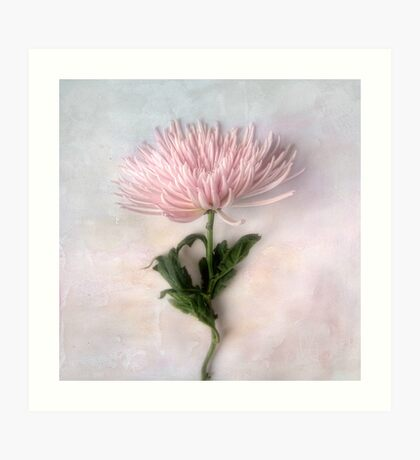 Pretty Pink Mum Art Print