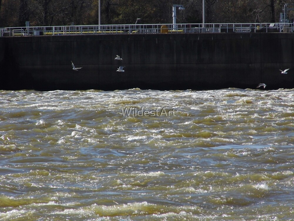 Sea Gulls On The River by WildestArt