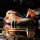 Male Mandarin Duck by Grant Glendinning