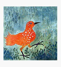 Bird Brain Rain Dance Photographic Print
