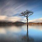 Solitary Tree by Grant Glendinning