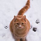 Ginger Kitty Discovers Snow by jacqi