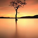 Lone Tree Afterglow by Grant Glendinning