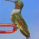 Ruby Throat Hummingbird by Phyllis Beiser