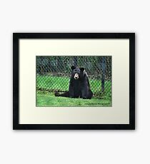 Yogi Bear Framed Print