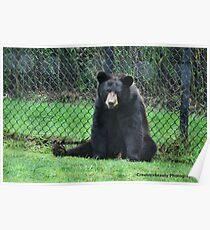 Yogi Bear Poster