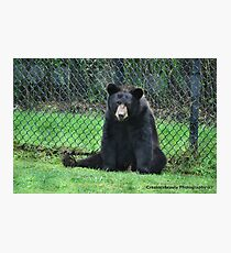 Yogi Bear Photographic Print