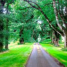 Tree Lined Avenue by Shulie1