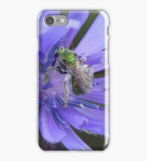 Sweat Bee on Wildflower iPhone Case/Skin