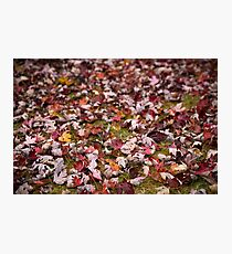 Autumn Leaves 1 Photographic Print