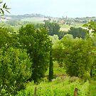 Tuscan Vineyard by Barbara  Brown