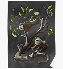 Owl Finches Float Poster