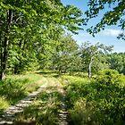 Swamp Rd, S. Royalston MA by Rebecca Bryson