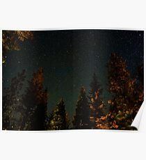Sea of Beautiful Stars Over Forest  Poster