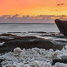Dolphin on the Rocks - Sunshine Coast Qld Australia by Beth  Wode