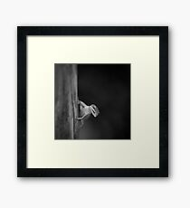 Green Anole, Florida Everglades Framed Print