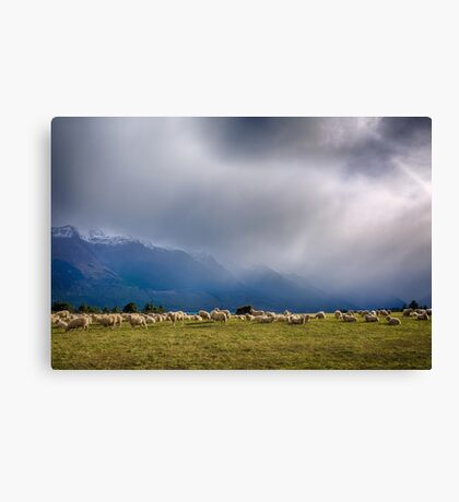 Sheep-storm Brewing Canvas Print
