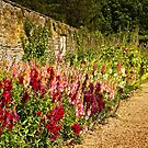 A Bed of Antirrhinums by vivsworld