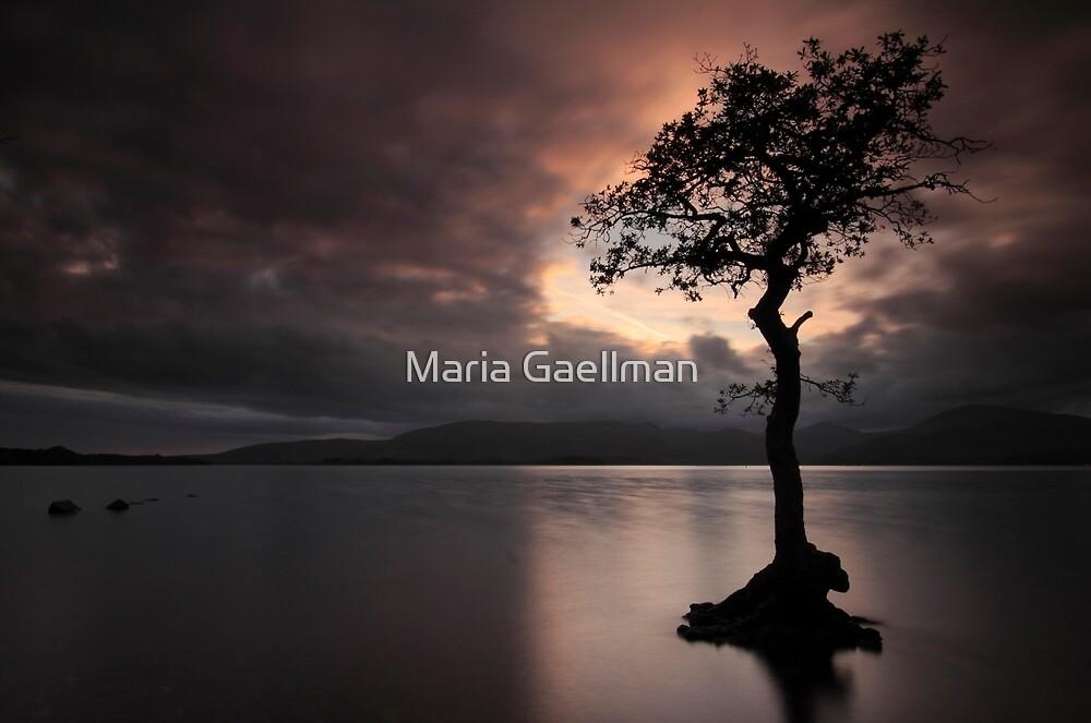Milarrochy Bay by Maria Gaellman