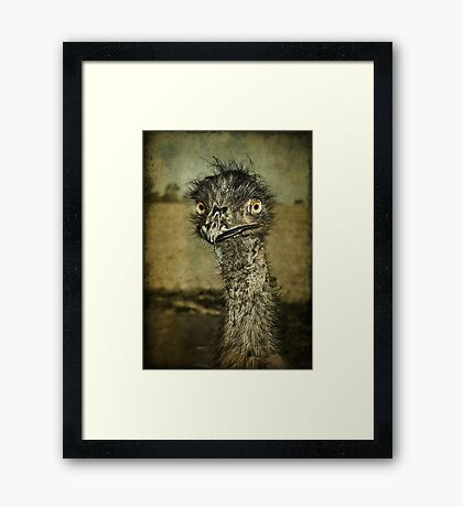 Mr Emu is a curious chap... Framed Print