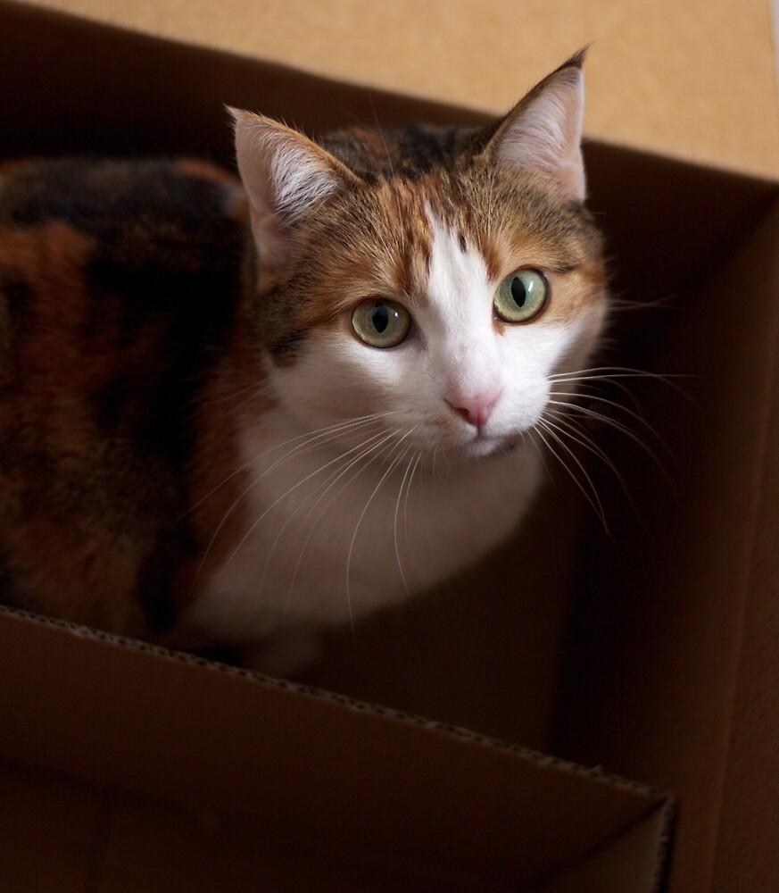 Portrait: Bel in box by Pat Heddles