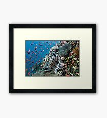 Lionfish Colours Framed Print
