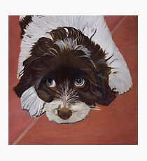 I See You - Cocker Spaniel Photographic Print