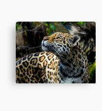 Beauty and Power  Canvas Print