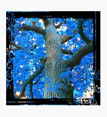 Blue Oak Tree Photographic Print
