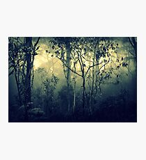 Stillness Speaks Photographic Print