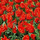 Storm in a tulip-field by Arie Koene