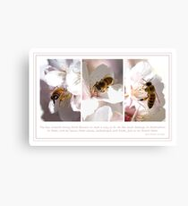 The Bee Collects Canvas Print