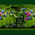 Colorful Berries in Green Foliage by steeber