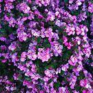 A Big Pop of Purple by trisha22