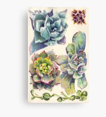 Summer Succulents Canvas Print